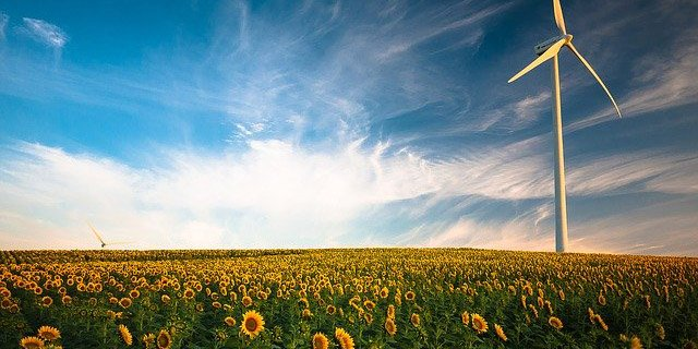 Field of sunflowers with wind turbines in the background